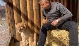Львенок-подросток по имени Симба поселился в Бахчисарайском зоопарке