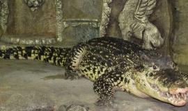 Аллигаторы поселятся в Зоопарке Бахчисарайского парка миниатюр