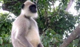 Сотрудники Бахчисарайского зоопарка готовы принять участие в поимке обезьянки, потерявшейся в Крымских горах