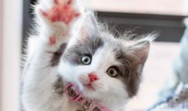 Мурляндия или Котопарк поможет собрать на одной территории самых красивых кошек Крыма