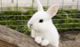 Кролики, обитающие в Бахчисарайском парке миниатюр, принесли потомство